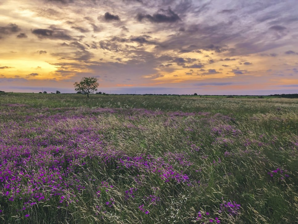 Commercial-Real-Estate-Experts-Amarillo Farm-land-for-sale-Texas-Panhandle 1. Farm & Ranch land for sale in the Texas Panhandle